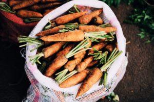fresh farmers market carrots